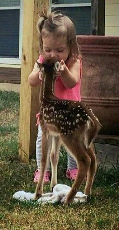 Kissing a baby deer