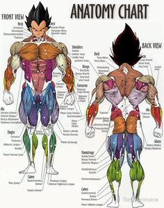 Tips For The Vegetarian Bodybuilder! Human anatomy chart of an IFBB pro sized human? - ForumsHuman anatomy chart of an IFBB pro sized human? Human Anatomy Chart, Human Anatomy And Physiology, Body Anatomy, Muscle Chart Anatomy, Human Muscle Anatomy, Anatomy Male, Anatomy Drawing, Arm Anatomy, Medical Anatomy