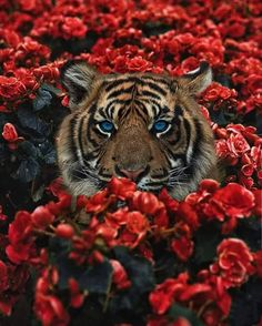 Surreal-Images-Digital-Art-Karencantuq - Animals - I Got Over The Most Difficult Story Of My Life By Wrapping My Feelings In Art - Animals And Pets, Baby Animals, Funny Animals, Cute Animals, Tier Wallpaper, Animal Wallpaper, Tiger Wallpaper Iphone, Cat Wallpaper, Beautiful Cats