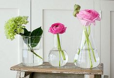 Glass Laboratory Vases by Natural History
