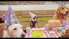 """""""You know they don't actually know it's their birthday right?"""".......................................... So? That makes birthdays better. These dogs aren't thinking, """"Ugh, I'm not where I thought I'd be in my career by now and my biological clock is ticking."""" They're just like, """"I GOT FRANDS, TREATZ, & A CONE ON MY HEAD LETS DO DIS."""""""
