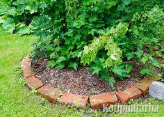 Vanhat tiilet sopivat puutarhan rajauksiin. Nurmikon leikkauksen kannalta olisi käytännöllisempää, jos tiilet olisi upotettu maahan. Summer Garden, Garden Planning, Recycled Materials, Stepping Stones, Recycling, Gardening, Outdoor Decor, Plants, Diy