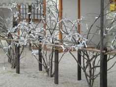 Prayers tied to a tree in Kyoto temple.