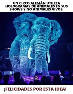 Circus Roncalli has replaced animals in their shows with holograms projected into the ring - to tackle animal abuse in the industry. Circus Roncalli, Circus Show, Le Zoo, Live Animals, Maine Coon Cats, Animal Cruelty, Sea World, Bored Panda, Animal Photography