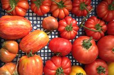 A guide to Italian tomatoes from Jamie Oliver's gardener Pete