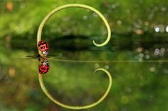 The Mirror by YOline SAntosa on 500px