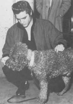 Elvis hand feeds a big black poodle Warwick Hotel, Rock And Roll, French Poodles, Standard Poodles, Elvis And Priscilla, Elvis Presley Photos, Graceland, No One Loves Me, Puppy Love