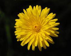 flower image #1