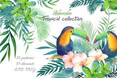 Tropical collection by Olga Ponomarchuk on @creativemarket
