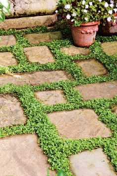 Live Carpet - Step Into an Oasis - Southernliving. Low-creeping plants, such as mazus or dwarf mondo grass, look great planted between flagstones. They frame each stone in green.