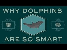 How smart are dolphi