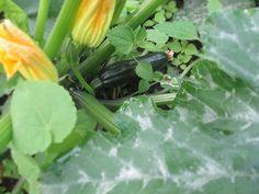 Vickie's Kitchen and Garden: My Frugal Ways this Week 7/5/15