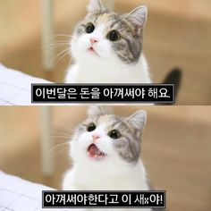Animals And Pets, Funny Animals, Cute Animals, Pet Dogs, Dog Cat, Komatsu Nana, Manhwa, Funny Memes, Geek Stuff