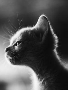 cute, chat, kitten