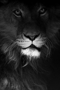 week in wildlife: Ivan, a lion, sits inside a private roadside zoo in Novi Pazar Beautiful Creatures, Animals Beautiful, Beautiful Lion, Lions Dont Lose Sleep, Animals And Pets, Cute Animals, Wild Animals, Vida Animal, Gato Grande