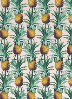 Pineapple Trellis Ar