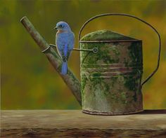 bluebird on old tin watering can...