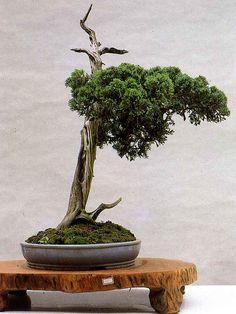 盆景 艺术 - 香儿 - xianger