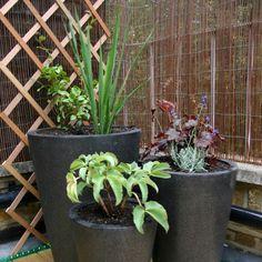 Plant smathering