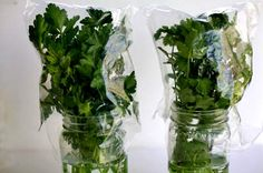 How to keep Cilantro and Parsley fresh for weeks in the refrigerator.  This really works!!