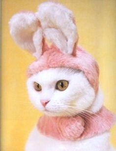 Photo by Takaka Iwasa. Catsu The Cat, Easter Cats, Easter Bunny, Happy Easter, Funny Animals, Cute Animals, Animals Images, Baby Animals, Chesire Cat