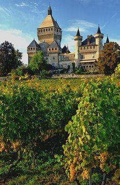 vineyard, Vufflens-le-Château, Monnaz, Canton of Vaud, Switzerland