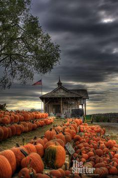 pumpkin patch under a stormy autumn sky....love the pumpkin orange against the blue-grey!