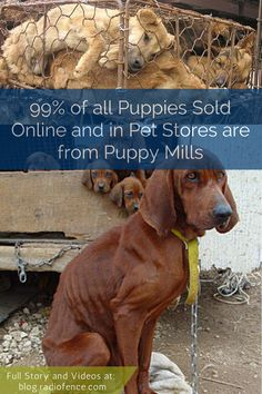 Click to learn more about puppy mills and watch 3 videos about the horrors behind the scenes. Help spread the word to put a STOP to puppy mills. http://blog.radiofence.com/?p=1882