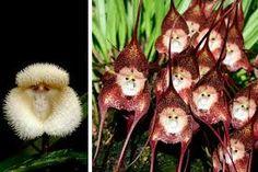 Resultado de imagem para flores raras e exoticas