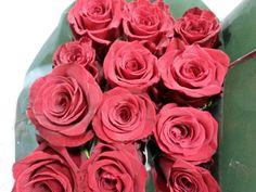#Rose #MarryMe; Availalbe at www.barendsen.nl