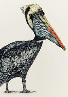 Peruvian Pelican A4 Art Print Giclee, Stephanie Le Cocq Studios © 2020 Vulnerable Species, Framed Prints, Art Prints, Pigment Ink, Textile Prints, Vulnerability, Giclee Print, Fine Art, Black And White