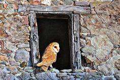 Alan M Hunt - Website Wildlife Paintings, Wildlife Art, Animal Paintings, Paintings For Sale, British Wildlife, Bird Art, Lion Sculpture, Artist, Artwork
