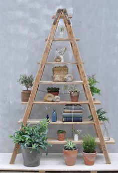 Vintage Reclaimed Ladder Shelves Rustic Shelving We have 3 options of our vintage A frame ladder shelving of. A Frame Ladder, Wooden Ladder Shelf, Ladder Bookshelf, Rustic Ladder, Diy Ladder, Frame Shelf, Rustic Shelves, Industrial Shelving, Ladder Storage