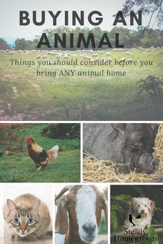 Buying an animal: things you should consider before bringing ANY animal home