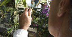 Qué tipo de imagen produce una lente convexa. Una lente convexa es una pieza de vidrio pulido curvada hacia afuera en ambos lados de la lente. Una lupa es un ejemplo de lente convexa simple. La córnea en el ojo de una persona es otro ejemplo de una lente convexa. Estos lentes se utilizan en la vida cotidiana.