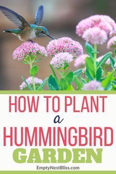 Hummingbird garden ideas to help you plant a garden to attract hummingbirds and butterflies. #gardening #backyard #garden