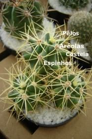 Foto 1_Detalhes de anatomia de cactos