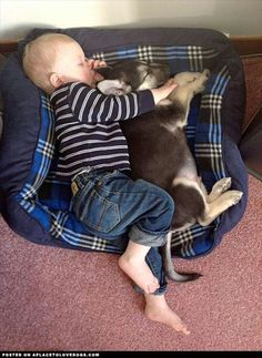 Why all kids need a dog