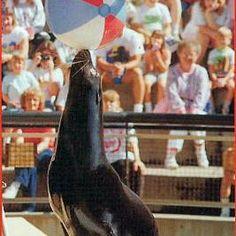 Sparky the Sea Lion!
