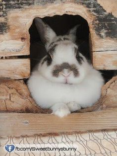Snuggly bunny in house