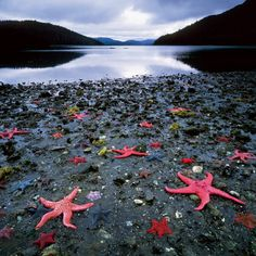 Starfish Colony, West Coast of New Zealand