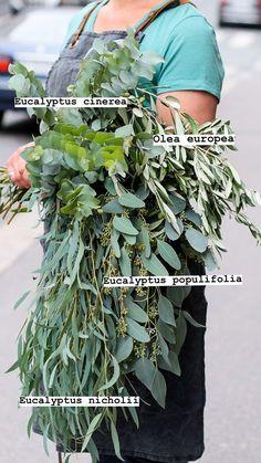 Tarinat • Instagram Plant Identification, Planting Flowers, Herbs, Plants, Instagram, Herb, Flora, Plant, Spice
