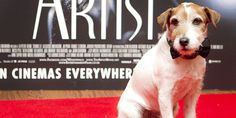 """Uggie the dog, the faithful on-screen companion of Jean Dujardin in the silent-movie """"The Artist,"""" is set to hang up his collar and retire."""