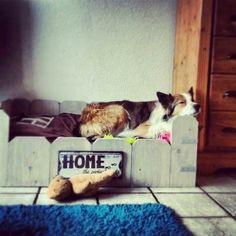 "Leuke ""mand"" Cats, Animals, Gatos, Animales, Animaux, Animais, Kitty, Cat, Animal"
