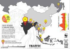 Saat ini, diperkirakan populasi harimau dunia yang hidup di alam liar kurang dari 3200 individu #GlobalTigerDay  Populasi harimau dunia saat ini terancam oleh penyusutan habitat, perburuan dan perdagangan ilegal.  Indonesia pernah punya 3 sub-spesies harimau: harimau Jawa, Bali dan Sumatera.  Harimau Jawa dan Bali dinyatakan punah di awal abad 20. Jangan sampai harimau Sumatera menyusul.