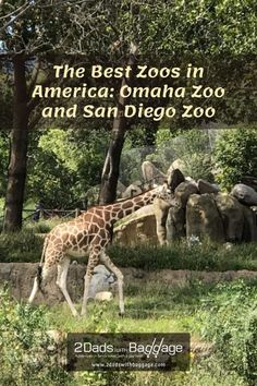 The Best Zoos in America: Omaha Zoo and San Diego Zoo - 2 Dads with Baggage Best Vacation Destinations, Best Vacation Spots, Best Places To Travel, Best Vacations, Vacation Trips, Best Zoos In America, Travel With Kids, Family Travel, Omaha Zoo