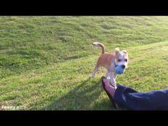Dog Plays Fetch Alone