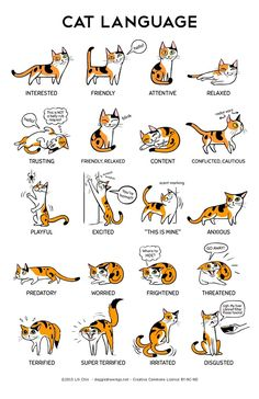 This cat language infographic shows how cat posture communicated their emotional state.