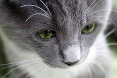 Do #Cats Grieve? 5 W