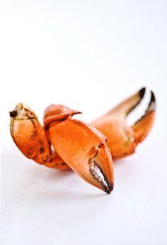 pinces de crabe pour plateau de fruits de mer